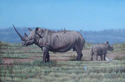 20091030133105-rhino2-720x474.jpg